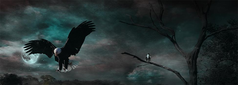 Loin des histoires d'hommes, les vuckails vivaient en paix.